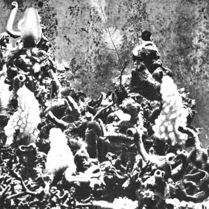 MUSICOMIX: Donato Epiro – Fiume Nero